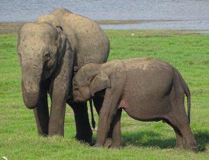 rondreizen Sri Lanka op reis