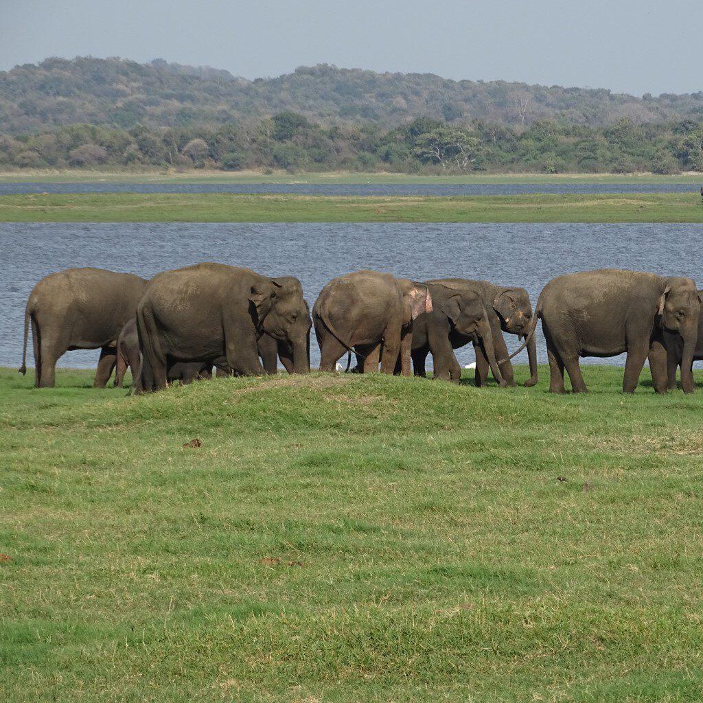 sri lanka op reis olifanten gathering