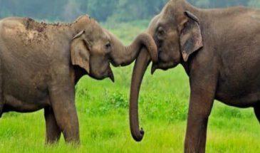 olifanten sri lanka op reis