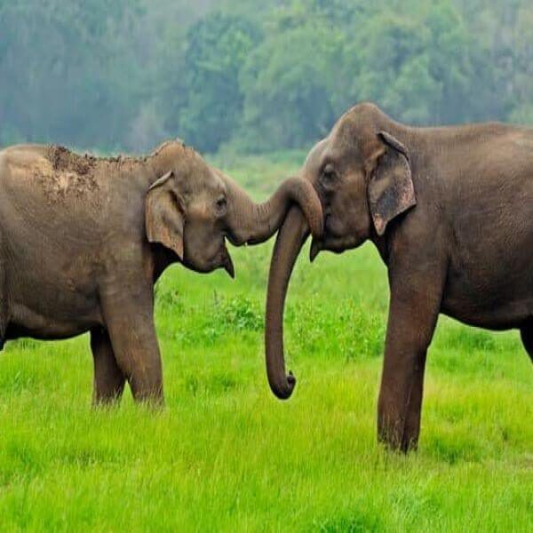 olifanten sri lanka op reis compact