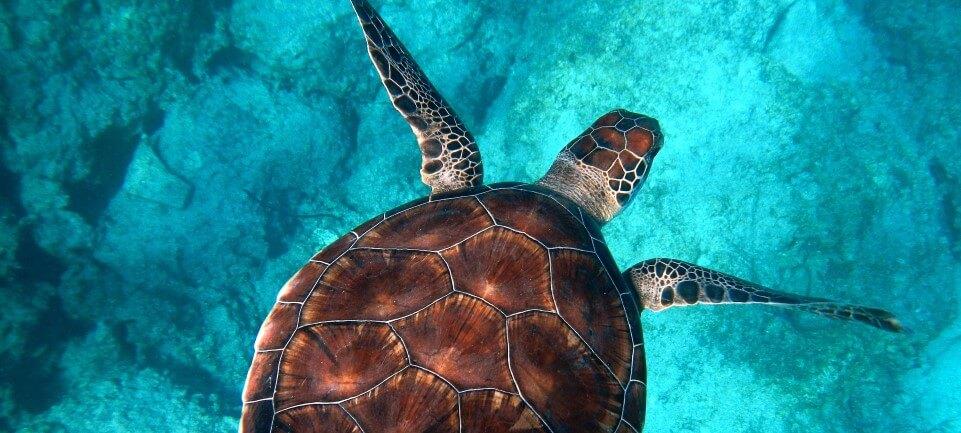 zeeschildpadden sri lanka op reis