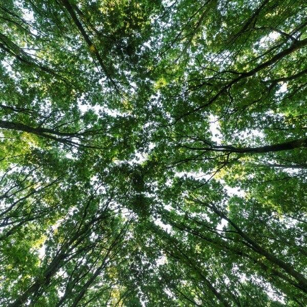 trees for all bomen lucht